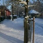 De dieren in de sneeuw (en lekker binnen)