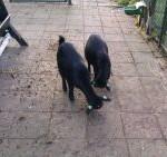 Nieuwe foto's van de geitjes