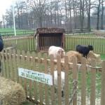 Dierenvallei op kerstfair in Woudenberg