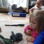 Jonge konijntjes geadopteerd