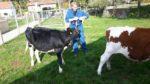 Koeien weer naar huis