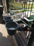 Dierenvallei verwelkomt nieuwe bewoners